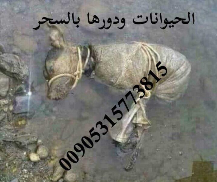 الحيوانات واستخدامه في السحر الموصلي 00905315773815